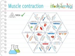 Muscle contraction - Tarsia (KS5)