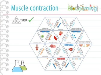 Muscle contraction - Tarsia (KS5)