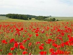 Remembrance Day World war 2 History Teaching Materials Plans Resources KS2 History