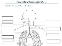 Label the respiratory system (worksheet)