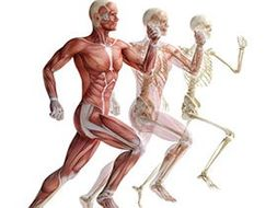 OCR A Level 2016 - Skeletal And Muscular System.