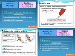 Chapter-1---The-skeletal-and-muscular-system.pptx