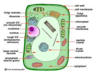 Plant Cell Organelle Extension