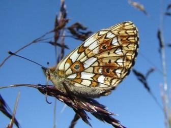 Minibeasts: Butterflies and Moths