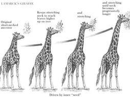 CB4b Edexcel 9-1- Darwin's theory - Lesson 1