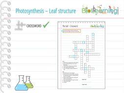 Photosynthesis - Leaf structure - Crossword (KS3/KS4)