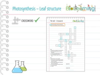 Photosynthesis - Leaf structure - Crossword (KS3/KS4)