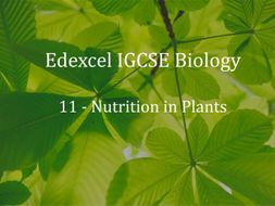 Edexcel IGCSE Biology Lecture 11 - Nutrition in Plants