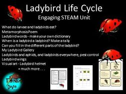 Ladybird/Ladybug, Life Cycle - Project based learning, KS1, NGSS, STEAM, Biomimicry