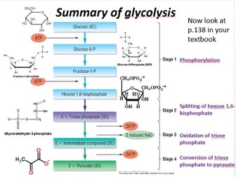 New biology a level ocr 572 glycolysis by lainajayne teaching new biology a level ocr 572 glycolysis by lainajayne teaching resources tes ccuart Image collections