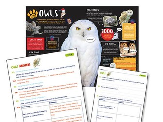 Year 4 Science Reading : owls