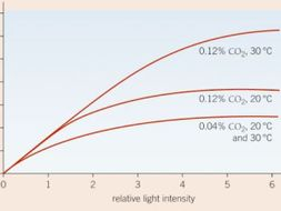 Limiting Factors affecting the Rate of Photosynthesis