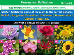 BWA-L6-Flowers-and-Pollination.ppt