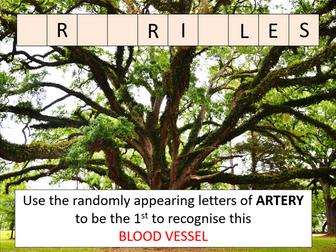 Blood circulation in a mammal (AQA A-level Biology)
