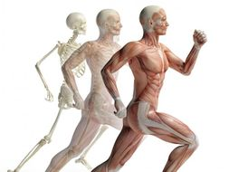 btec applied science 2016 unit 8 musculoskeletal system physiology of human body systems