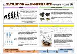 Y6-Evolution-and-Inheritance-Knowledge-Organiser.docx