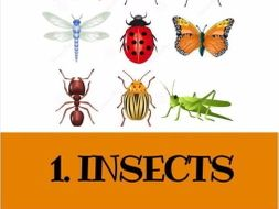 5 GREAT READING LESSONS: 1. Insects (+Listening)