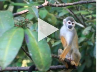 Exploring Ecosystems: Tropical Rainforest Diversity