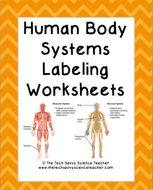 Human Body System Labeling Worksheets