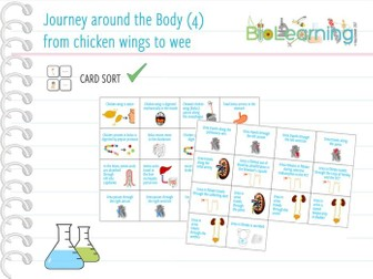 Journey around the body (4): from chicken wings to wee - Card sort (KS4)