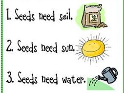 Primary Ks1 Science How To Plant A Seed