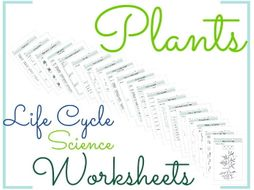 Plants Life Cycle Science Worksheets 3
