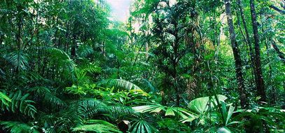 topic 8 forest under threat indirect threats to the tropical rainforest taiga