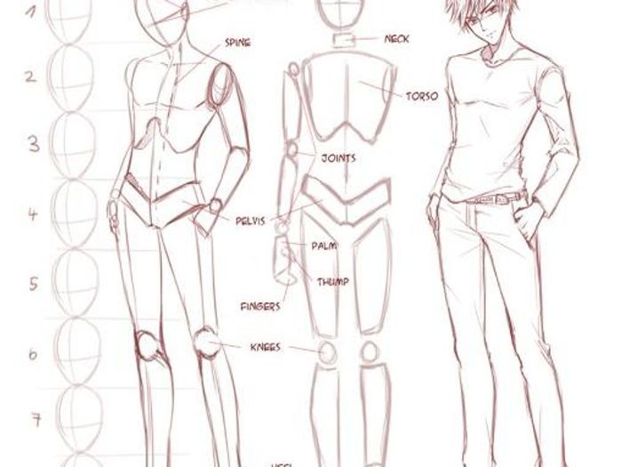 Anime Drawing Human Body Proportions Www Picturesso Com