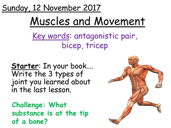 Year 7 AQA Activate Organisms: Movement - Muscles