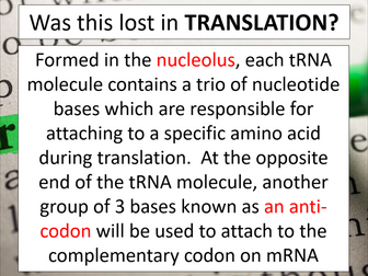 Translation (AQA A-level Biology)