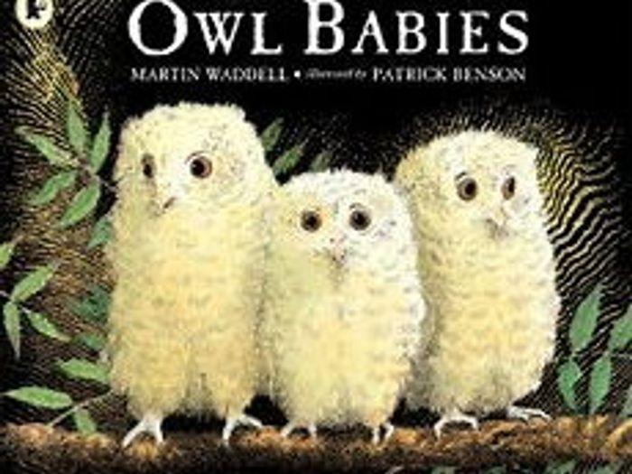 Image of: Birds Eyfs Medium Term Plan For Owl Babiesnocturnal Animals Tes Eyfs Medium Term Plan For Owl Babiesnocturnal Animals By Eyfsks1