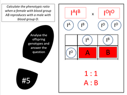 Codominant and multiple alleles (AQA A-level Biology)