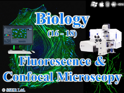 3.2.1.3 Studying Cells 5 - Fluorescence & Confocal Microscopy