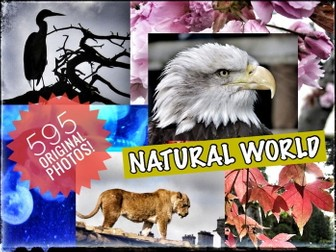 Photographs of the Natural World. 595 Original, Copiable Photographs
