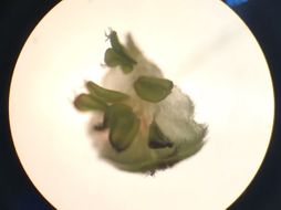 Plant reproduction Whole topic PowerPoints & Q's (EDUQAS)