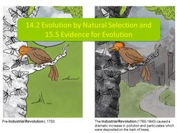 14.2-Evolution-by-Natural-Selection-and-15.5-Evidence-for-Evolution.pptx