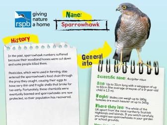 Birds of Prey Factfile