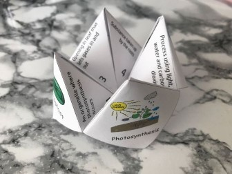 Photosynthesis Fortune Teller