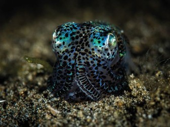 KS3-4: Marine life and what we can learn from it
