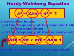 A2 Biology- Hardy Weinburg principle