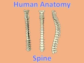 Human Anatomy Quiz: Spine