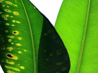 AQA B4 Bioenergetics Revision
