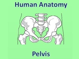 Human Anatomy Quiz: Pelvis