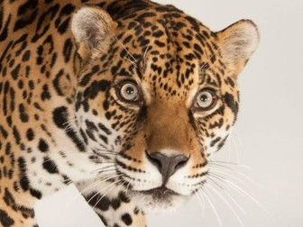 Endangered Animals - 5 resources