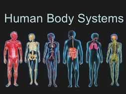 Edexcel GCSE PE - body systems - cardiovascular, muscular, respiratory and skeletal