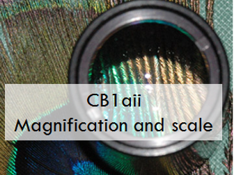 CB1aii:  Magnification and scale