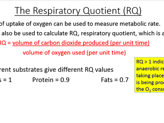 New A Level Biology OCR respiration bundle