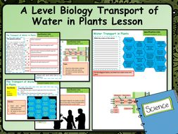 A Level Biology Water Movement in Plants Lesson & Activities