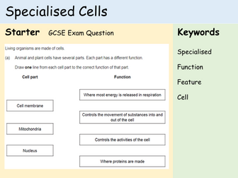 KS3 Cells - Lesson 4 - Specialised Cells