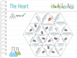 The Heart - Tarsia (KS3/4/5)